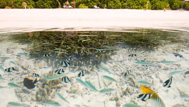 Fish swimming in the crystal clear seas of the Maldives