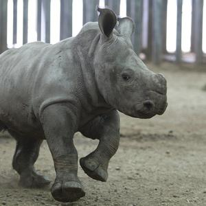 Officials in India are on alert for poachers after surging flood waters forced endangered rhinos to leave a game reserve