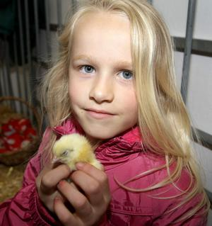 Lois Lyttle pictured with a baby chick