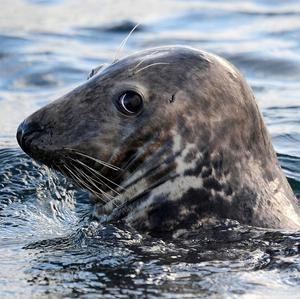 A seal sanctuary in Co Kerry has been targeted by protesters