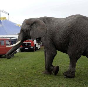 MPs have agreed to urge a ban on the use of wild animals in circuses