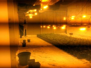 A total of 800 plants were seized along with a substantial amount of electrical equipment during the Millisle raid