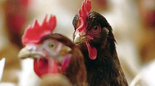 Poultry processor Moy Park has announced a £170m investment which will create 628 jobs and a new innovation centre