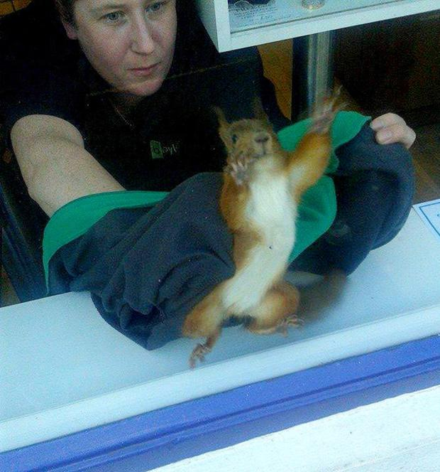 Nuala Scally-Hill helps to capture the squirrel that invaded a jeweller's shop in Ballycastle
