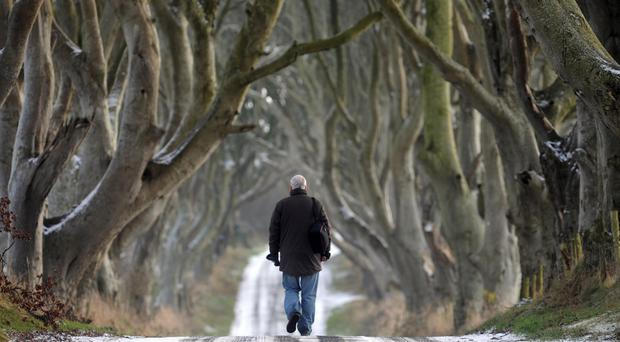 A man walks between the Dark Hedges at Stranocum, Co Antrim, during the Big Freeze of 2010
