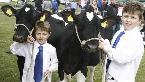 Cattle drive: Brothers Harry and Jack Orr with their black and whites at Ballymena Show