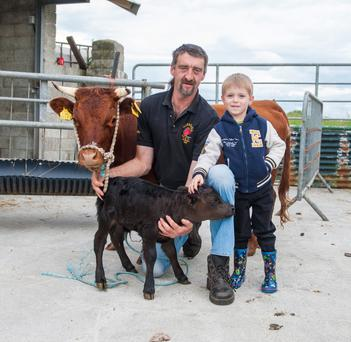 James Vance and his son Nathan (4) with the newborn calf and mother at their farmyard near Ballintra in Co Donegal and, (above) Nathan with Shorty next to a standard sized animal