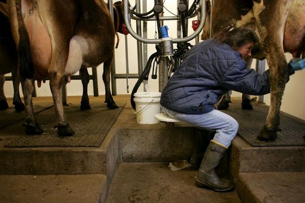 Dairy farmers across Northern Ireland have been hit by a global fall in the price paid for milk and milk products