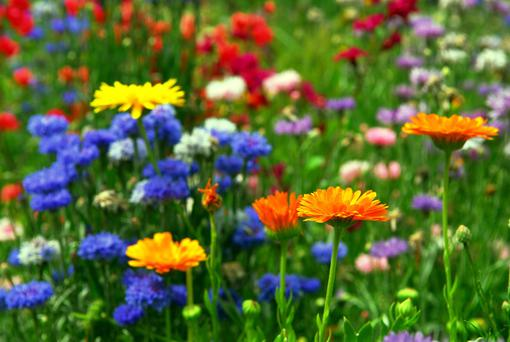 Three ground-breaking projects in Northern Ireland are competing to secure a £120,000 windfall to transform their communities with native wildflowers