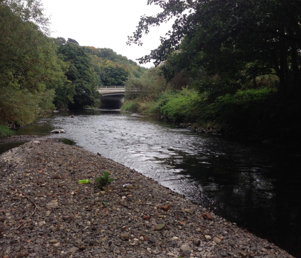 Anglers fear salmon won't be able to spawn in the Lagan and have billed DARD's Rivers Agency for the damage