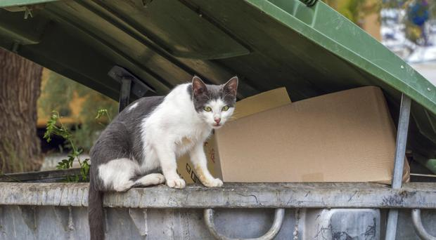 Feral cats can be vulnerable in cold weather