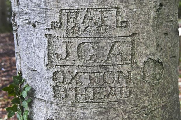 The carvings found in tree bark at Mount Stewart by National Trust ranger Toby Edwards