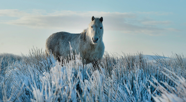 A wild horse stands on Black Mountain
