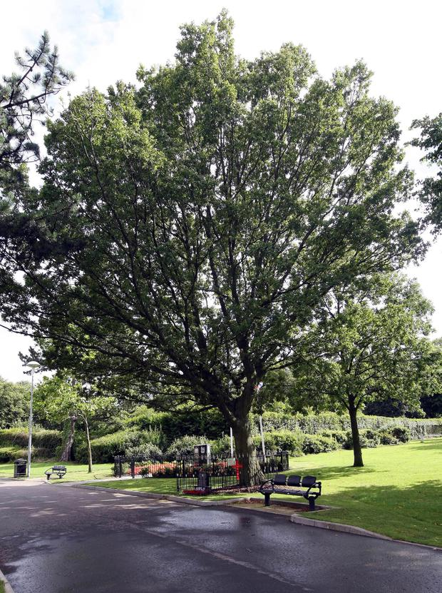 The Peace Tree in Woodvale Park