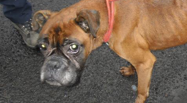 Barney was in such bad health the vet could not save him
