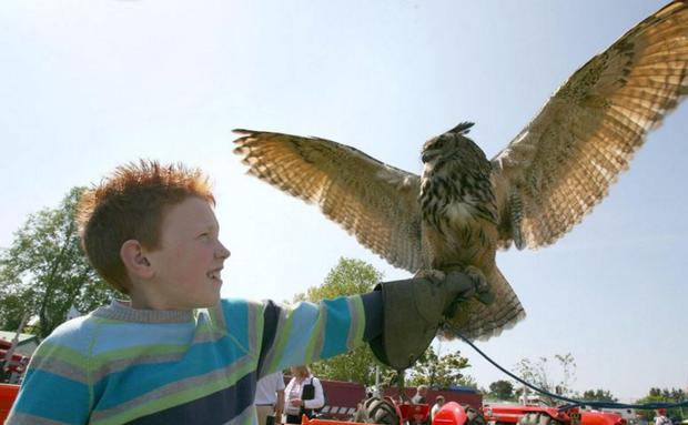 Falconry has proved popular down the years with the huge crowds which flock to the Balmoral Show