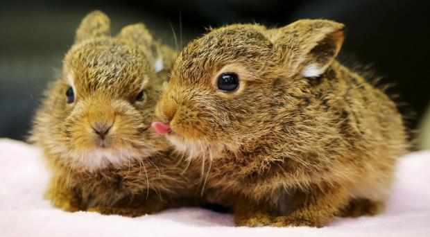 The hares that were rescued