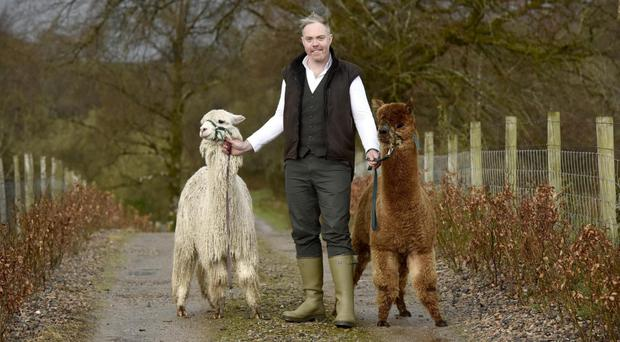 Roger Clarke with some of his prized alpacas