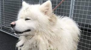 Snowy is back home after his horrible ordeal