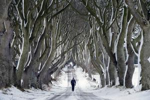 A solitary figure is framed by the famous trees of the Dark Hedges. January 15. 2015