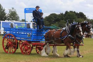 Enjoying the Omagh Show are Millcottage Clydesdales on parade