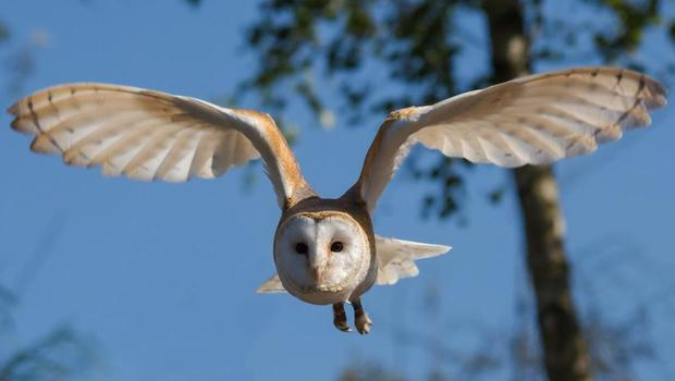 The study looked at the behaviour of a wide range of animals and birds (Queens University/PA)