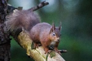 Visitors to Mount Stewart can now see red squirrels from a special viewing hide (Liam McBurney/PA)