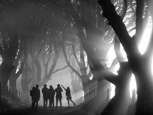 Bob McCallion's image of the Dark Hedges which was selected for a BBC Countryfile calendar