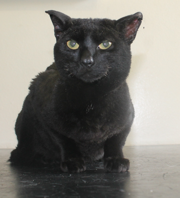 Family pet Kitty was badly hurt in an Eleventh Night bonfire