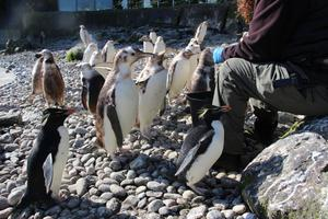 Zoo fans can get regular updates on its penguins