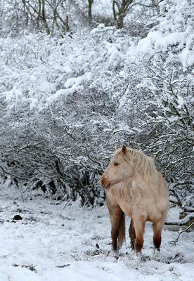 A horse braves the sleet and snow in Belfast