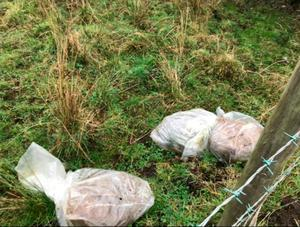 The dead animals found in the Stoneyford area of Lisburn