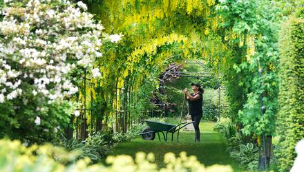 Gardener Nicola Bantham, 41, at Seaton Delaval Hall in Northumberland tending to the laburnum. Picture date: Tuesday June 15, 2021.