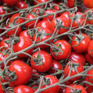 CDEnviro specialises in recycling water used to wash tomatoes