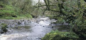 Signs of pollution have been found in a tributary of the River Faughan, near a huge illegal dump