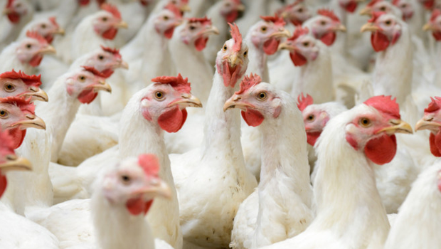 There are currently 245 intensive factory farms scattered across the province