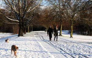 Dog-walkers in Stormont Estate yesterday
