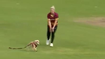 Dog leg before wicket: The cricket match is brought to a halt as Dazzle the dog runs on to the field and plays fetch with the ball