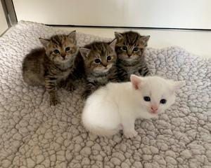 Some of the kittens at the sanctuary