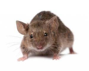 The new statistics show that staff were called out nearly 800 times to deal with vermin throughout the year.
