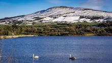 Swans at the foot of snow-filled hills in Camlough