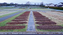 Rows of graves are prepared in Sixmile Cemetery in Co Antrim as the coronavirus death toll continues to rise