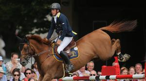 Sport horses are bred for events such as show jumping, dressage and eventing
