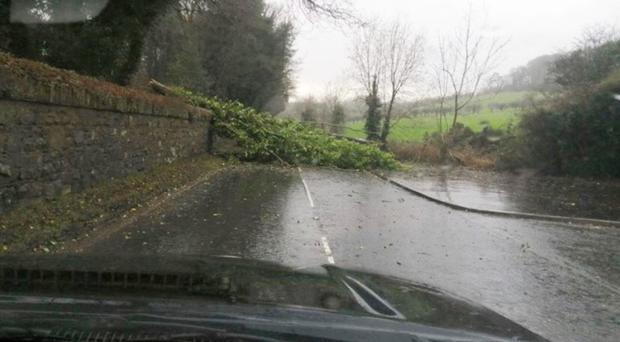 Cedric Wilson was driving to collect his granddaughter when he narrowly avoided being hit by a tree that fell close to the village of Greyabbey