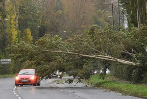 A tree blocks a road in south Belfast