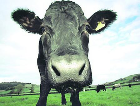 A cow that died from BSE has been confirmed to be an isolated case
