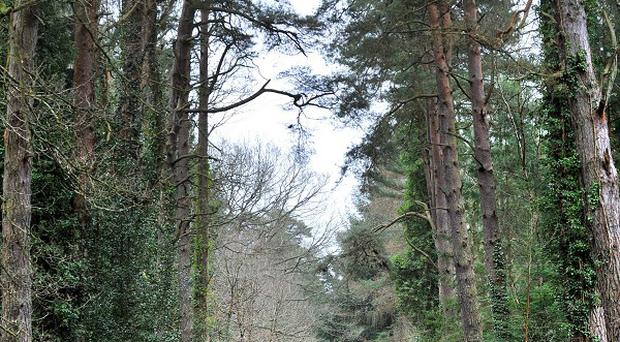 Some areas of forest will be cleared to cut the risk of disease