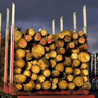 New legislation means licences are now required for the felling of woodland over a certain size in Northern Ireland