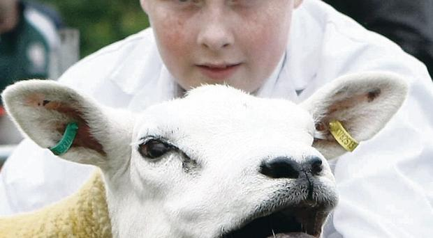 Martin McConville with a texel sheep