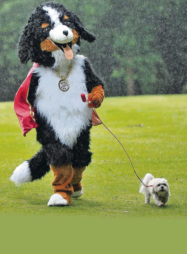 Scoop Dog will be out and about in our parks and public place